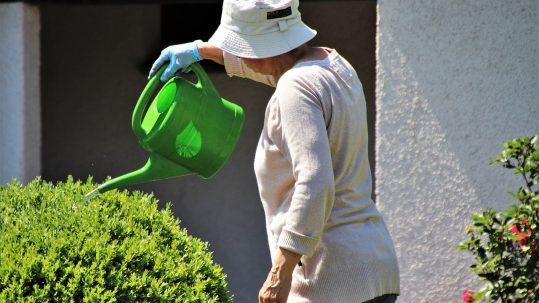 Elderly hydrated, watering plants